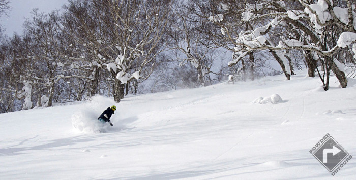 Blue bird and deep at Niseko Moiwa!